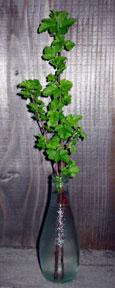 physocarpus capitatus, ninebark