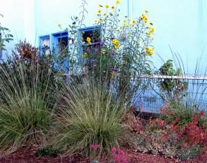 Deer Grass and Maximilian Sunflower