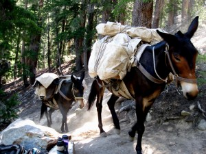Pack Mules on Duck Pass Trail