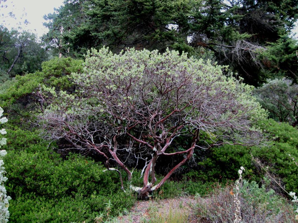 Drystonegarden 187 Manzanita