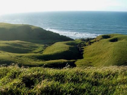 Pasture Grass