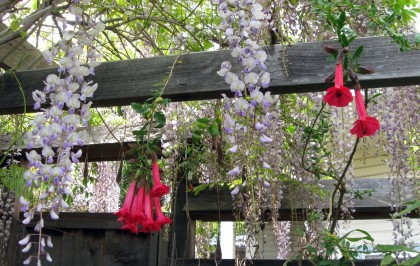 Sacred Flower with Wisteria