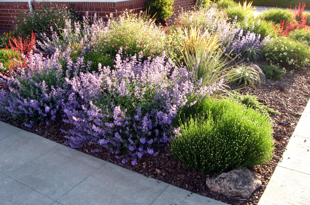 Gardening with drought tolerant plants on pinterest for Low maintenance drought tolerant plants