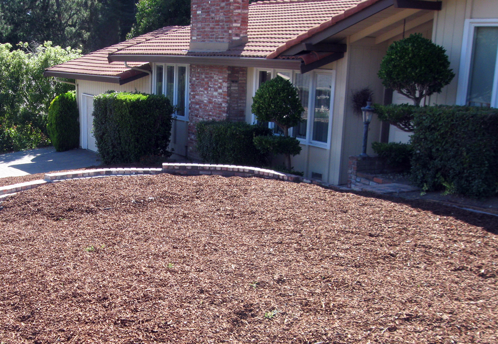 Drystonegarden blog archive lawn to garden conversion for Garden conversion