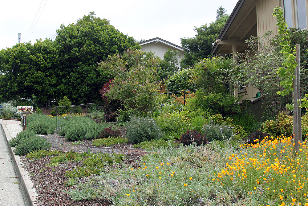 Drystonegarden for Garden conversion